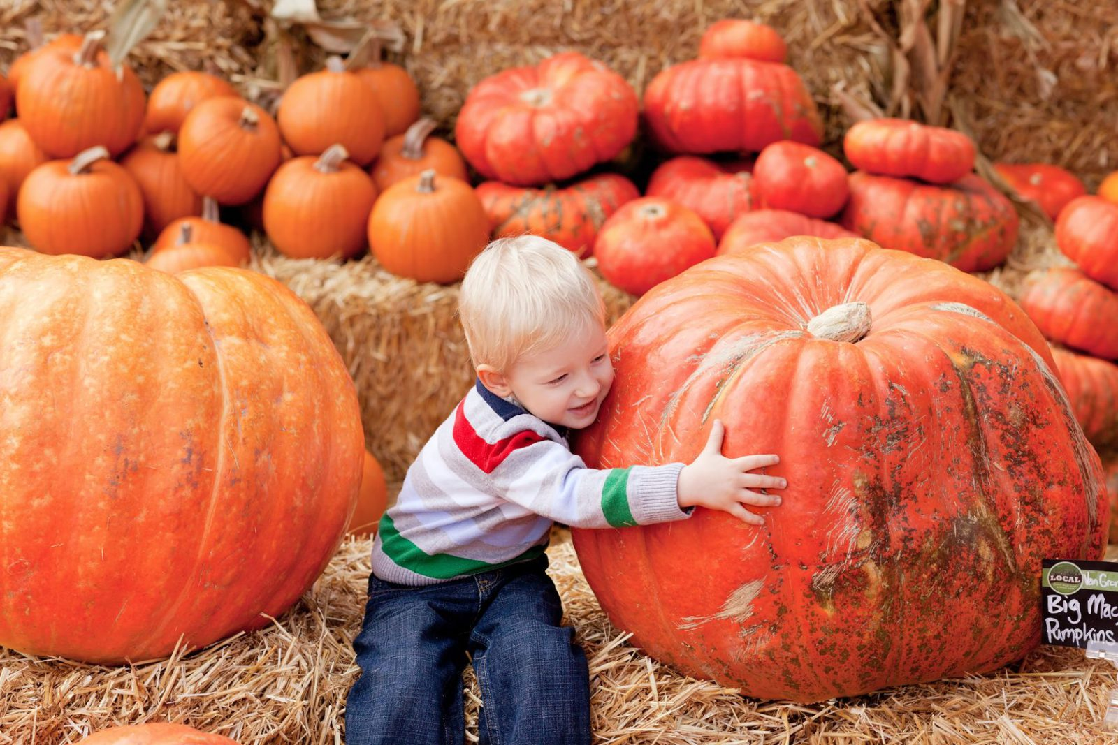 October Harvest Festivals: Know the Basics