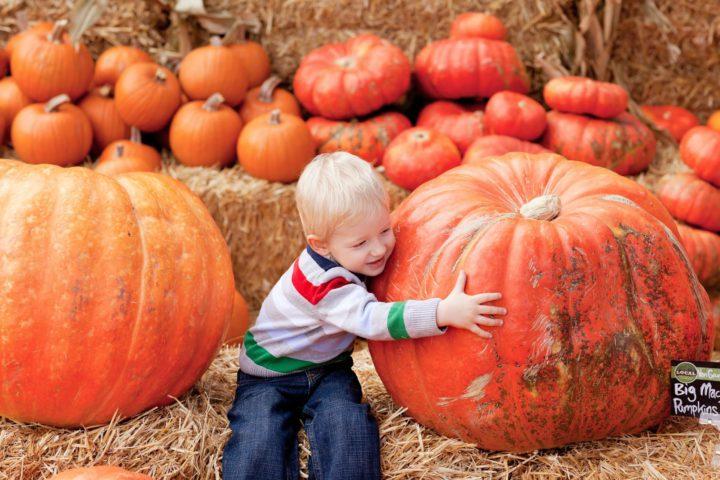 October Harvest Festivals: Know the Basics