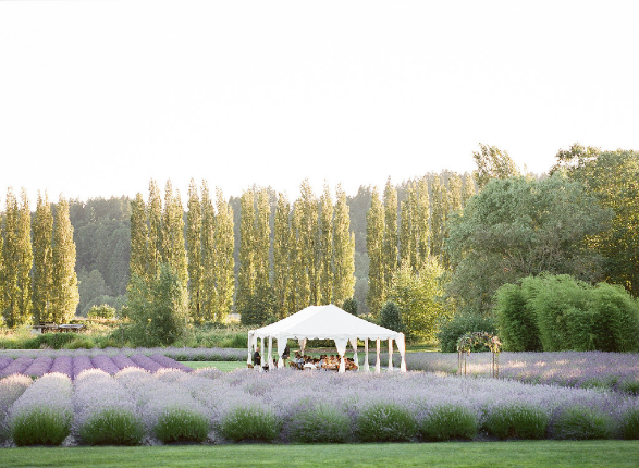 Lavender Garden event venue in Seattle