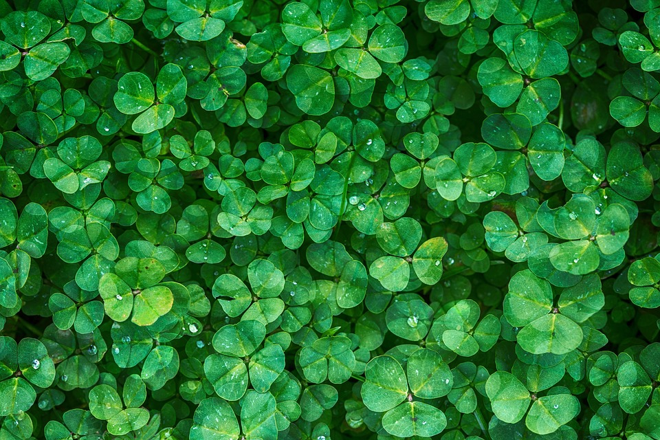 St. Patrick's Day Clover Background