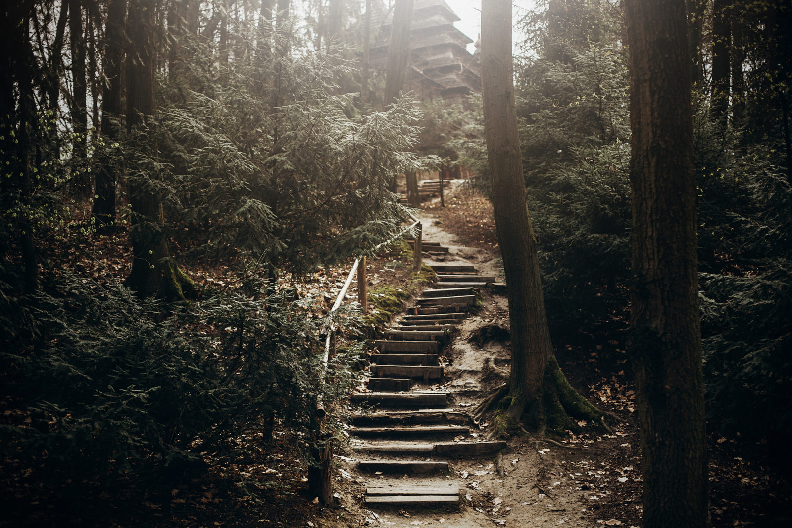 Mystical Forest Stairs