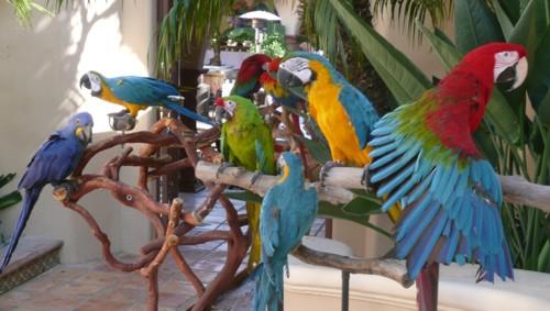 parrots for parties