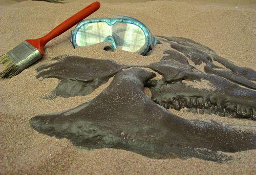 paleontologist toolkit
