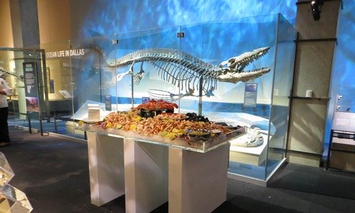 private event catering at a natural history museum