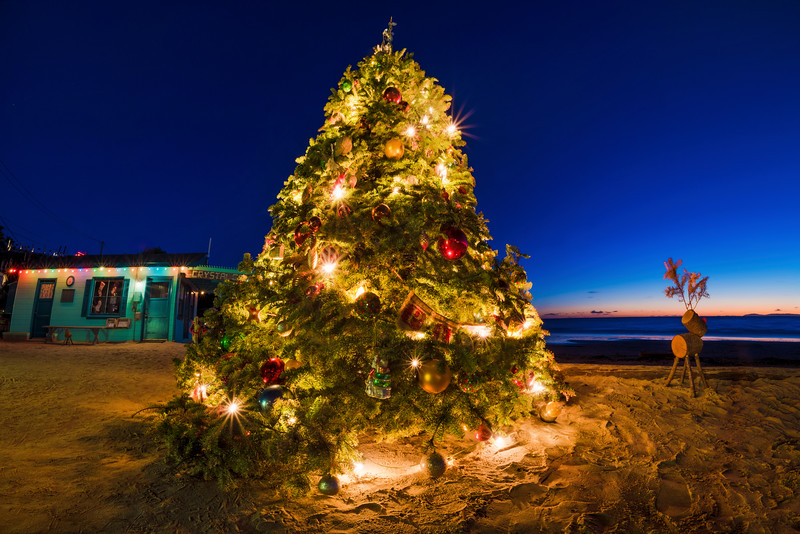 Laguna Beach Christmas Tree