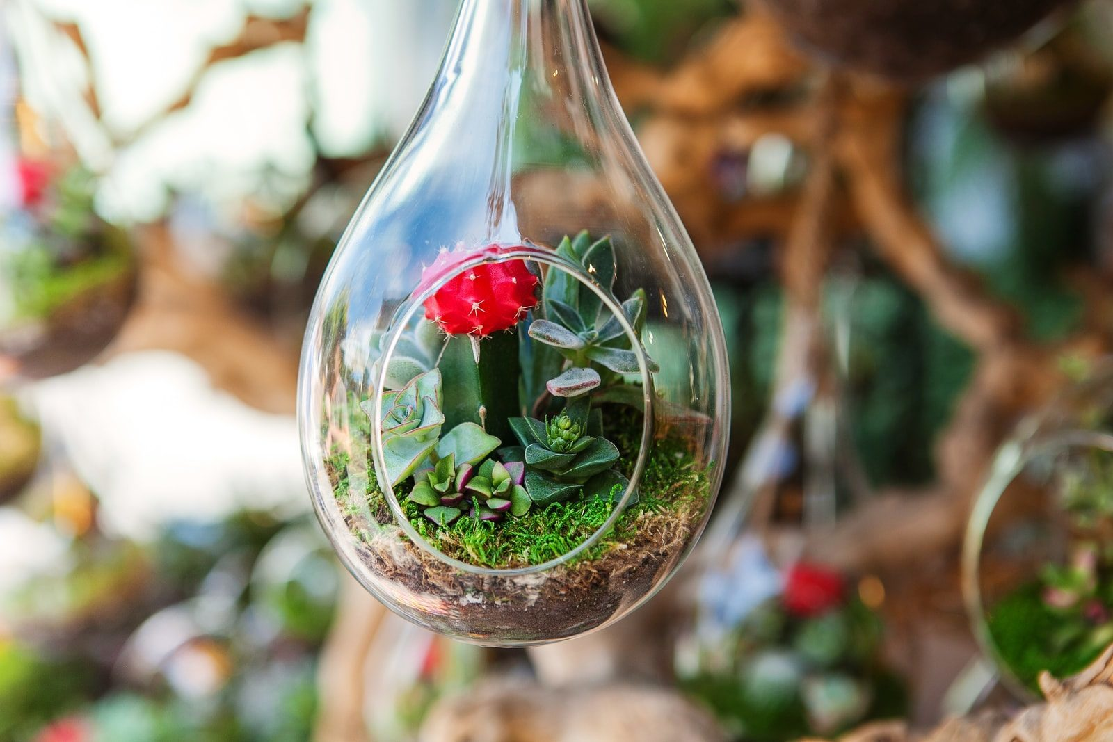 build your own terrariums