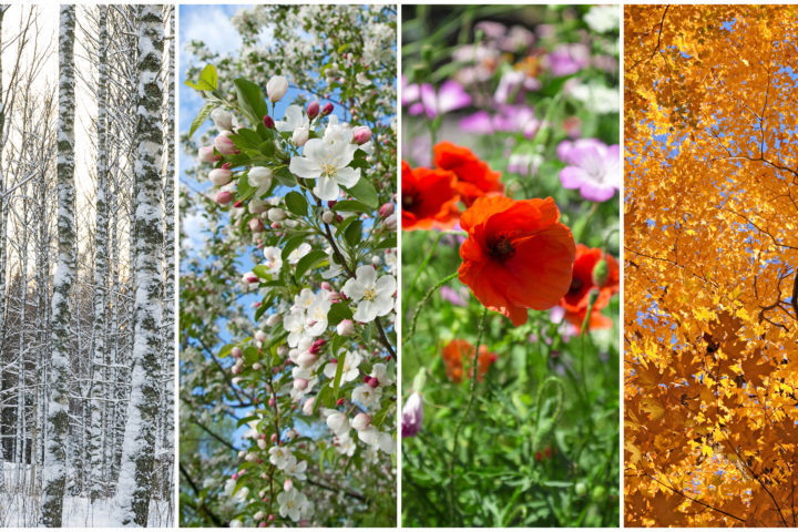 Creative Event Themes: Four Seasons