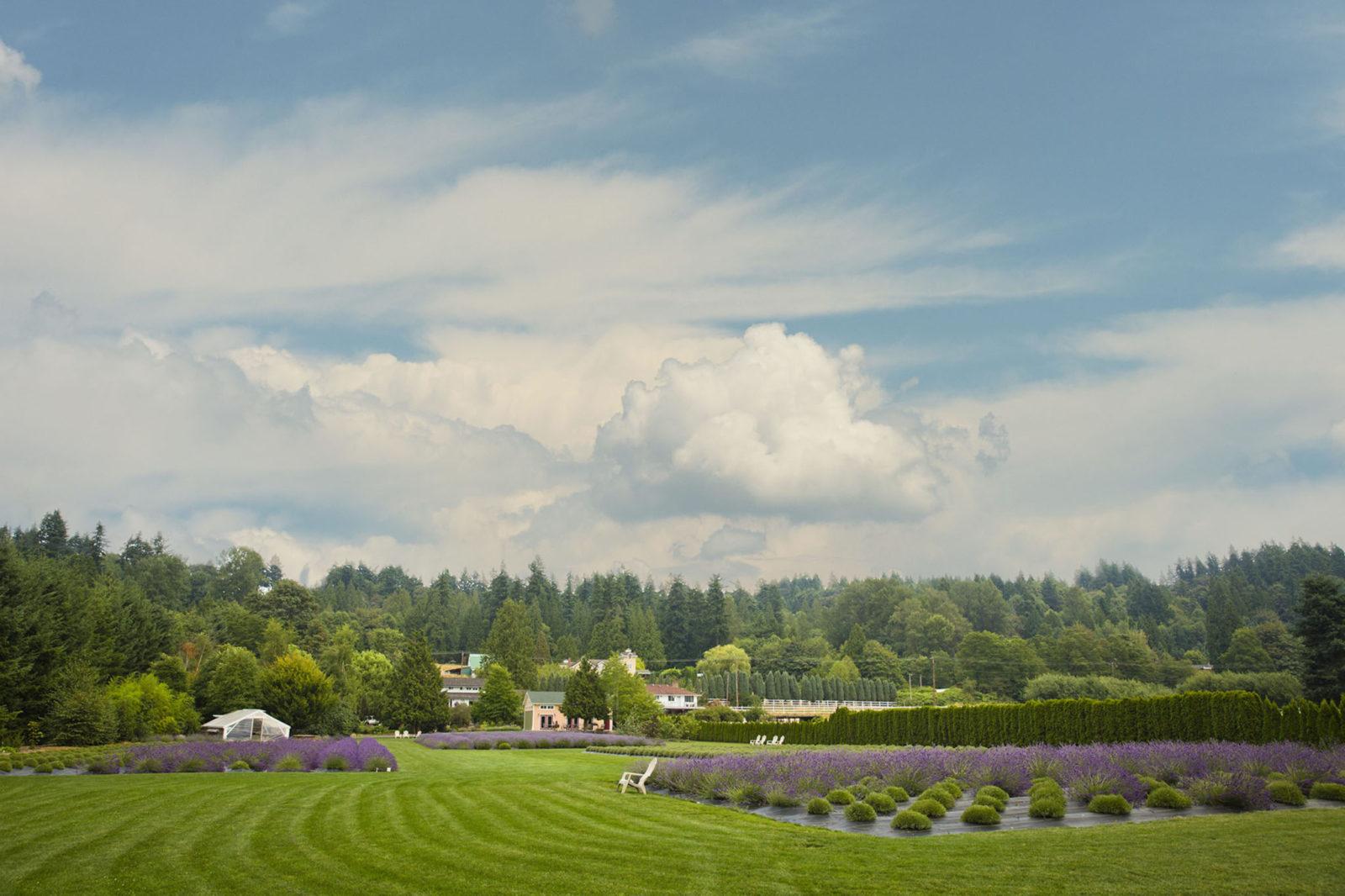 Woodinville Lavender Venue