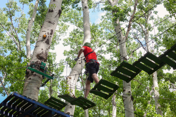 Treetop Courses By The Numbers