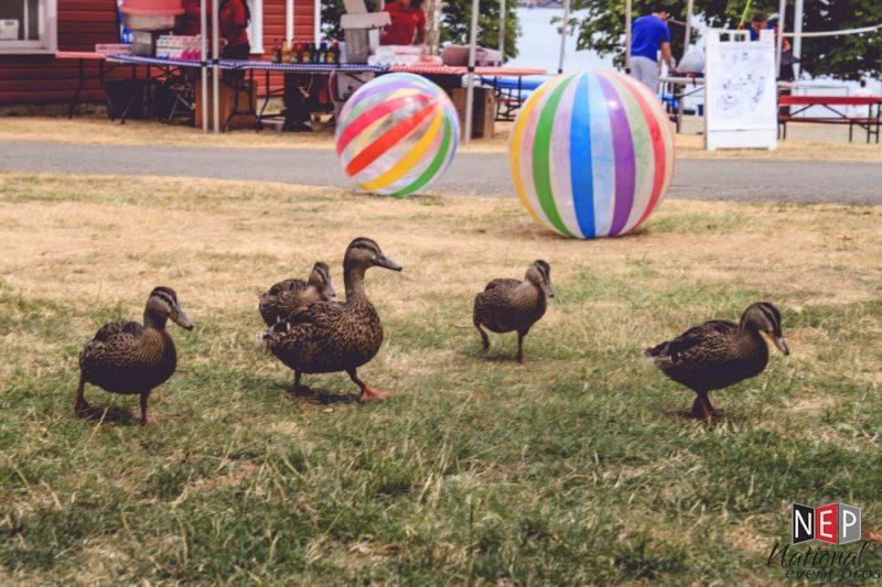 ducks at vasa park
